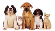 foothill ranch veterinary pharmacy